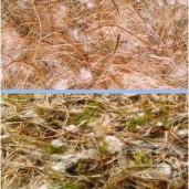 Materiál na hnízda Nobby - koko+sisál+juta+bavlna 100 g